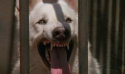Cine Flashback: White Dog